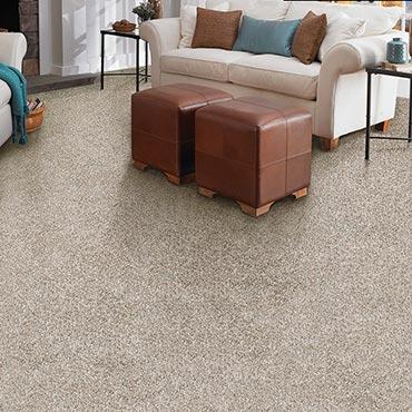 Anderson Tuftex Carpet |  - 3636