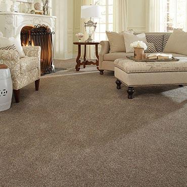 Anderson Tuftex Carpet |  - 3643
