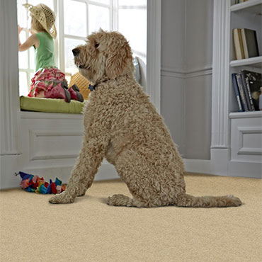 Phenix Carpet  | Game/Play Rooms