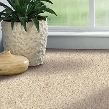 Shaw Carpet Bellera Collection -