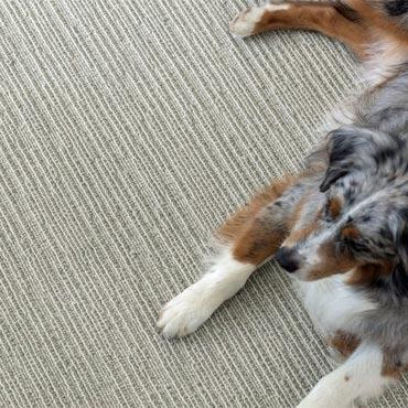 Anderson Tuftex Carpet -