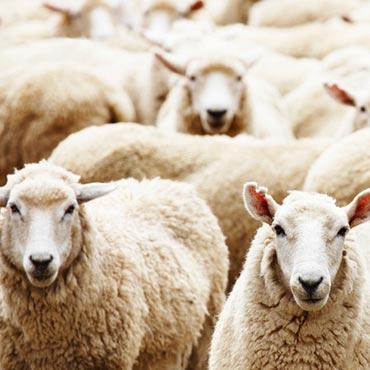 Glen Eden Wool Carpet -