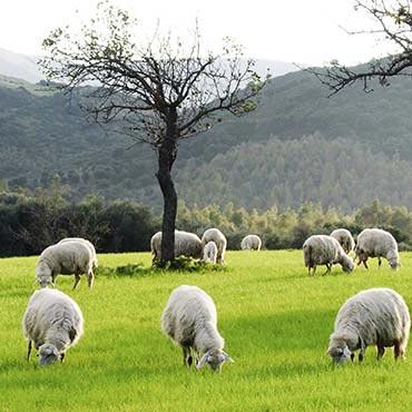 Hibernia Wool Carpets -